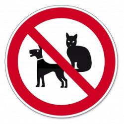 Animali domestici: cosa fare in caso di divieti del condominio